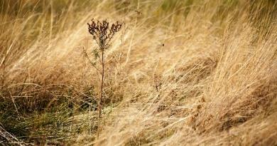 Если горит сухая трава